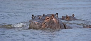 Zambia-Botswana-Wildlife-Safari-d